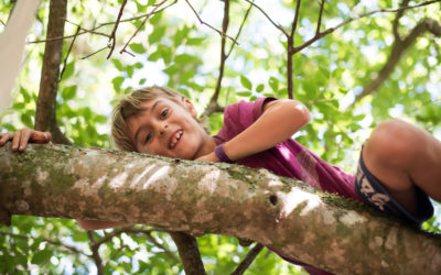 Why Climbing a Tree is a Great Idea by Marleen Lammers